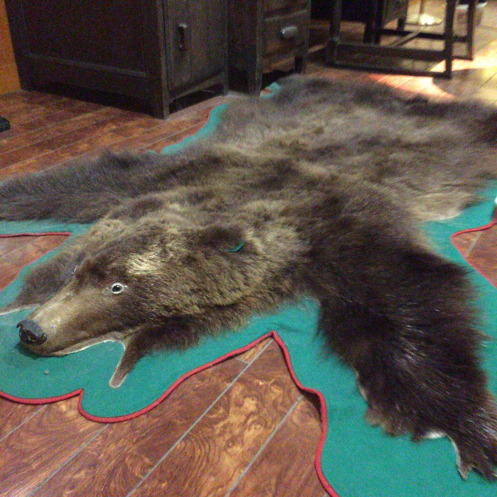 竹鶴家に敷かれていた熊の毛皮。竹鶴自身が仕留めたと言われている。