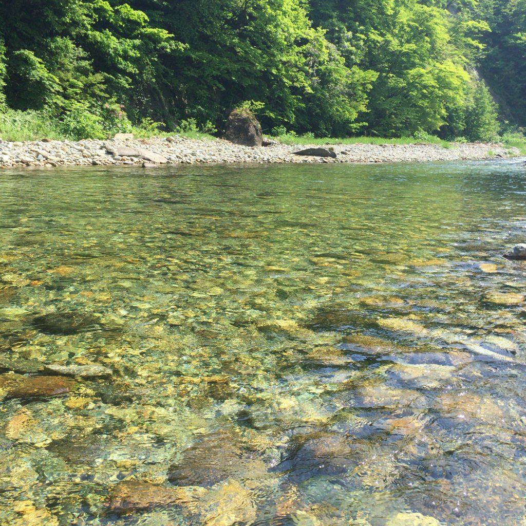 あまりにも澄んでいる新川の水。